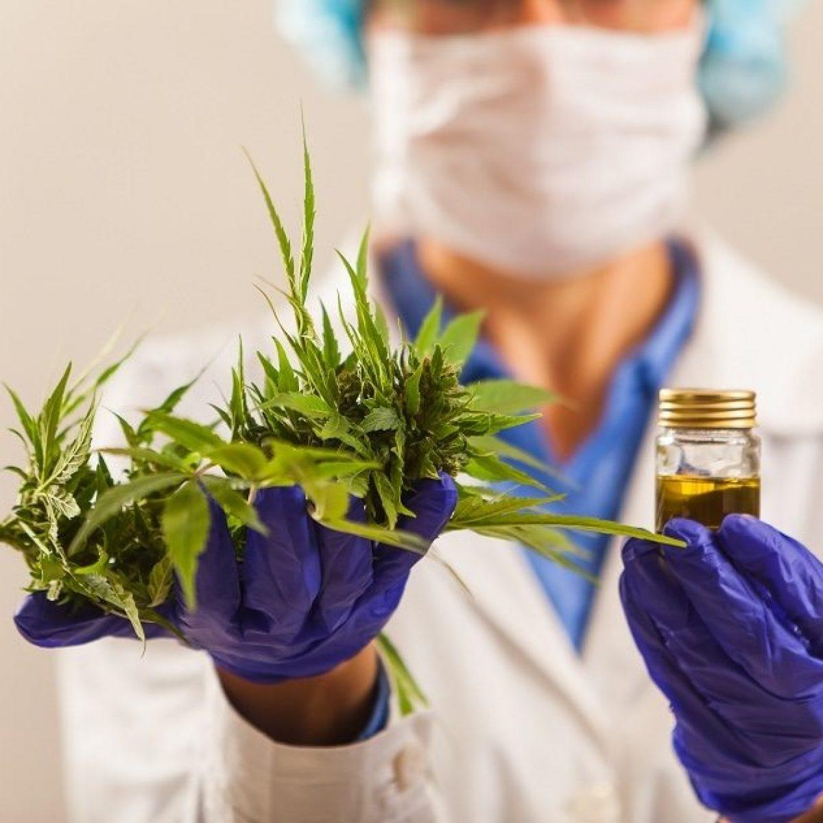 Coronavirus, la svolta per cura e prevenzione potrebbe essere nella Cannabis
