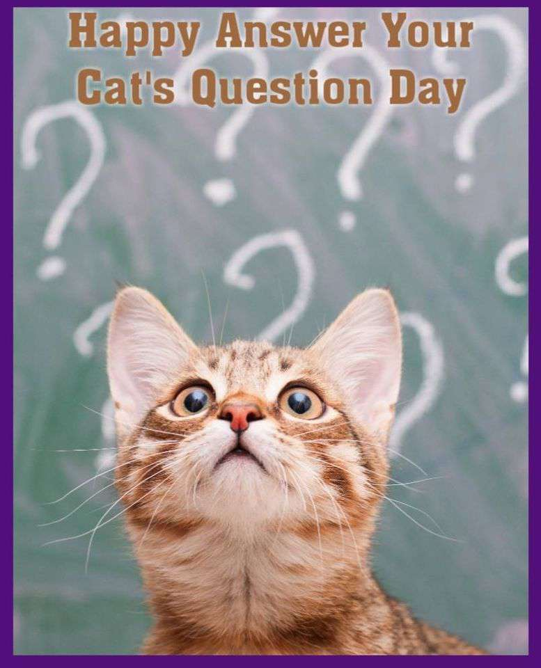 National Answer Your Cat's Questions Day Wishes pics free download