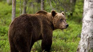 Κλώτσησε αρκούδα για πλάκα και το άγριο ζώο τον ξέσκισε (Video)