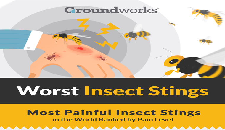 how-to-stop-stinging-insects-from-getting-into-your-home
