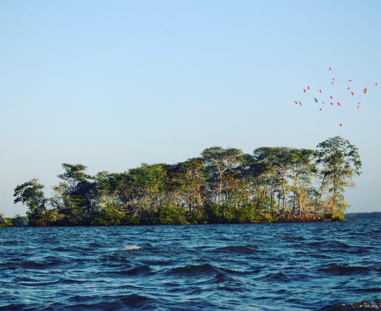 revoada no meio do delta do parnaiba
