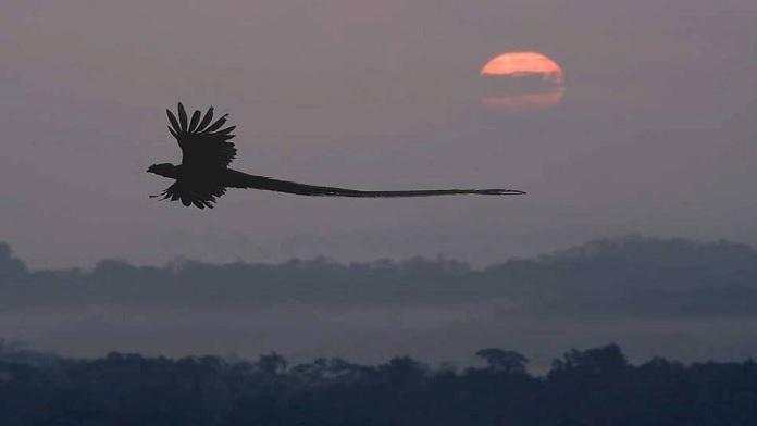 L'uccello raro che parlava cinque lingue