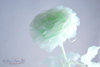 Монохромная зелёная роза