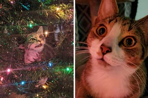 5 Cats That Love Christmas Trees More Than Life Itself