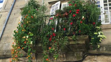 Un balcón muy florido en la Rúa do Vilar de Santiago de Compostela