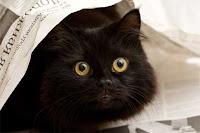 gambar seekor kucing hitam sedang berselimut
