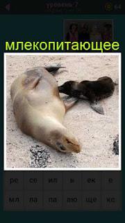 на берегу лежит млекопитающее с детенышем 667 слов 7 уровень
