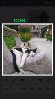 кошка спит на камне по середине улицы около скамейки