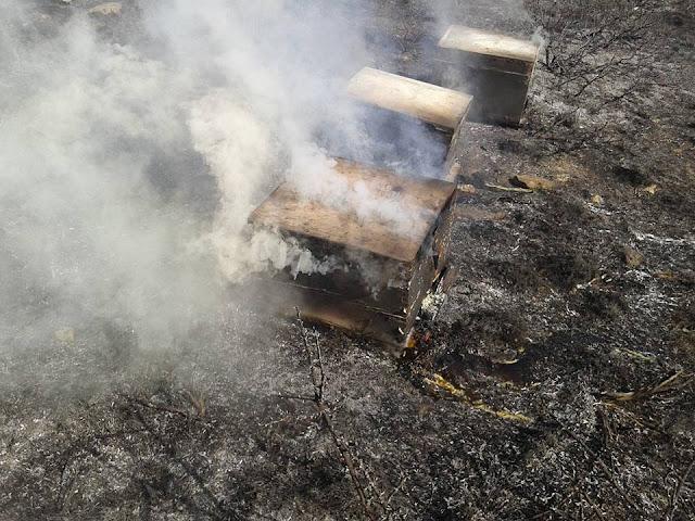 Εικόνες που κόβουν την ανάσα: Κάηκαν μελίσσια μες στον χειμώνα