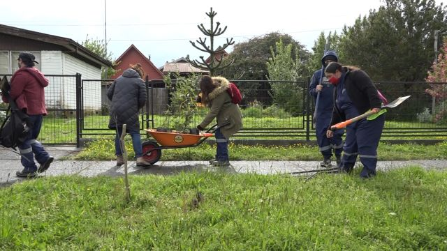 Plantación de árboles en Llanquihue