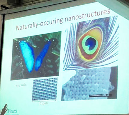 Professor Povinelli shows examples of pigmentless color in nature due to nanostructures (Source: Palmia Observatory)