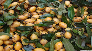 Kundang fruit images wallpaper