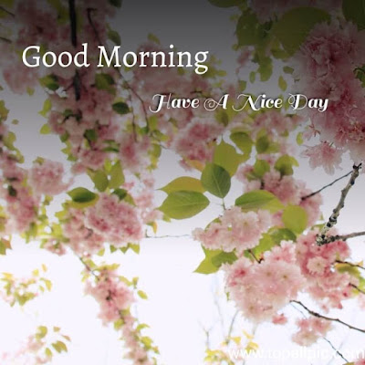 good morning flower for him with images