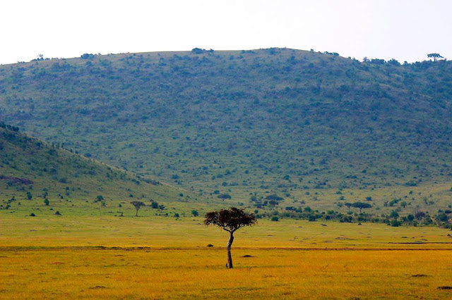 Catastrophic outlook for African savannahs due to rise in CO2 levels