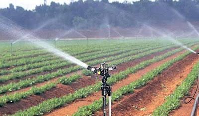 Sprinkler irrigation in Kenya