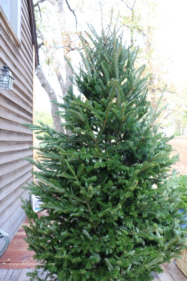 A beautiful 8-9 foot fresh cut Fraiser tree is the most important item for a beautifully flocked tree