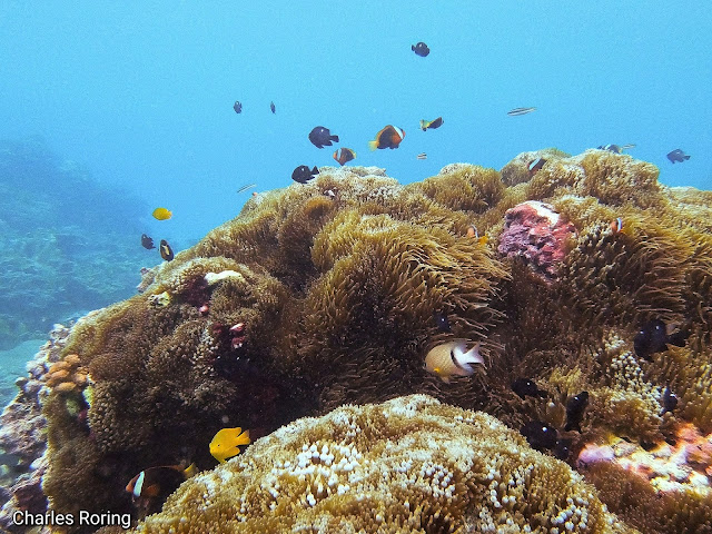 marine life in coral reef of west papua