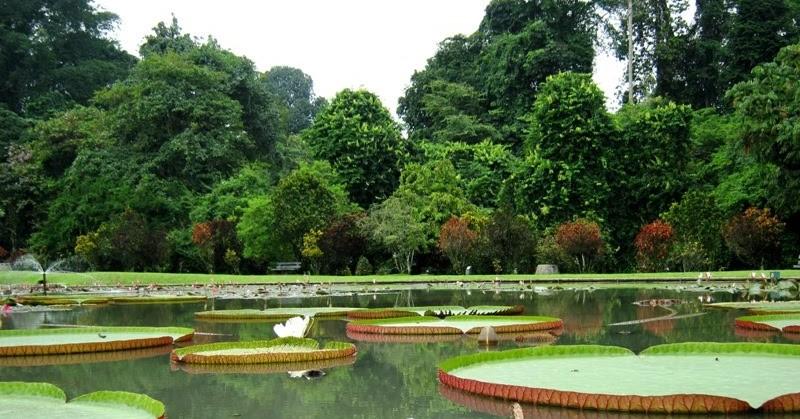 Siapa Pendiri Kebun Raya Bogor