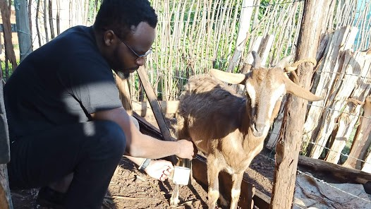 My name is Wambugu Farmer, and I will take you through a few outlines that I have learnt about dairy goat farming during the past few years.