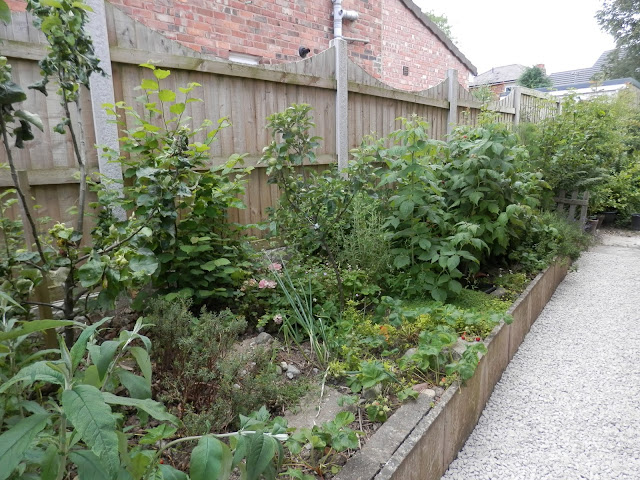 Diary of a UK permaculture (ish) garden by UK garden blogger secondhandsusie.blogspot.com #gardenblogger #ukpermaculture #suburbanpermaculture #raisedbedgarden #frontgardenallotment