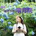 [日本] 繡球小徑 鐮倉「明月院 」