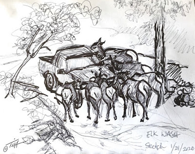 """""""Cleaning Crew"""" elk sketch one ©2020 Tina M.Welter"""