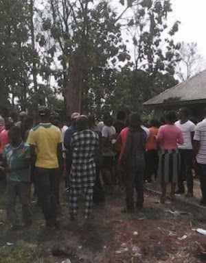 Are you sure?Big Tree  That Was Cut Down Years Ago Rises Up Again In delta
