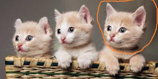 Perawatan Anak Kucing Tanpa Induk