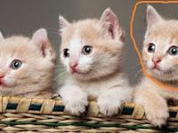 Tips Perawatan Kucing Yang Kehilangan Induknya.