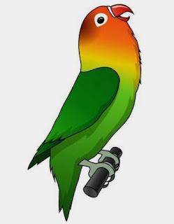 Cara memilih lovebird prospek lomba kicau