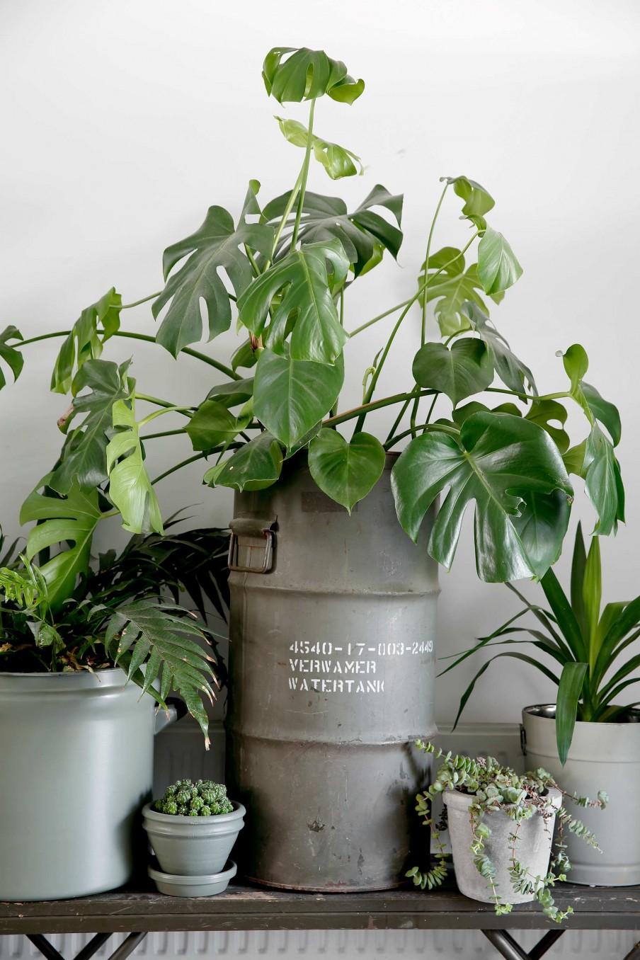 plantas, cactus, maceta, pintar maceta, estilo industrial, estilo nórdico, costilla de adán,