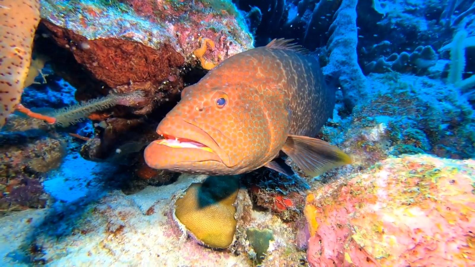Mengenal Jenis Jenis Ikan Karang Demersal Cerita Pesisir