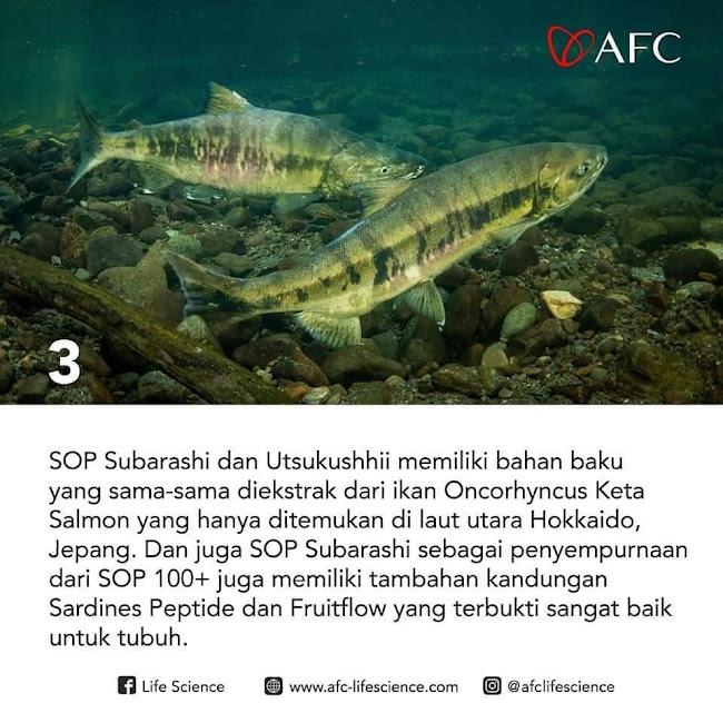 Agen Jual: SOP Subarashi Made In Japan, Khasiat AFC SOP 100+, di Palangkaraya