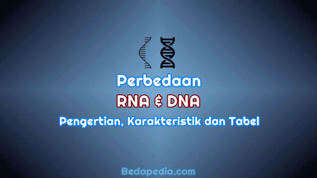 Perbedaan RNA dan DNA, Pengertian, Karakteristik dan Tabel