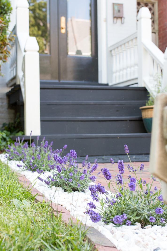 Landscaping With Herbs A Lavender Lined Walk 17 Apart