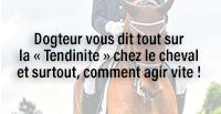 Dogteur vous dit tout sur la « Tendinite » chez le cheval et surtout, comment agir vite !