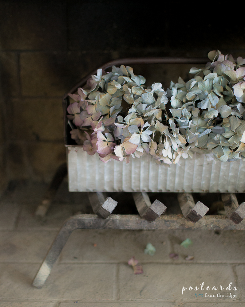 Love these dried hydrangeas in the metal caddy as fall fireplace decor.