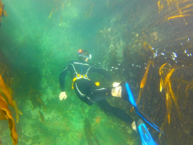 Snorkeller in kelp forest, Simon's Town