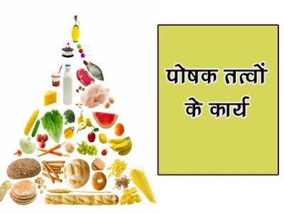 पोषक तत्वों कार्य   पोषक तत्वों का उनके कार्य के आधार पर वर्गीकरण  Nutrient Functions
