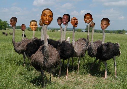 chris bosh ostrich - photo #6