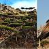 Fakta Unik Pulau Socorta, Penjara Gaib Dajjal Yang Masih Di Selimuti  Kabut Misteri