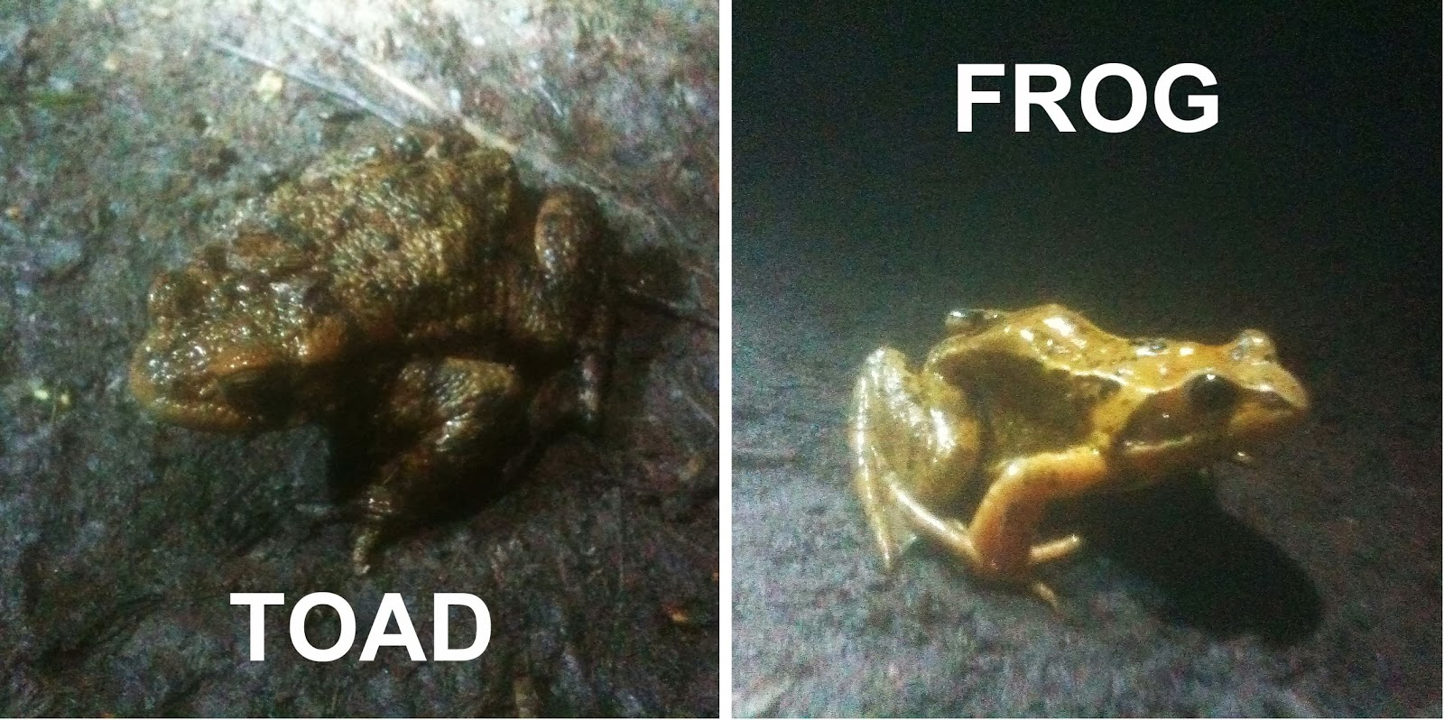 So In My Opinion Birthday Toads And Frogs