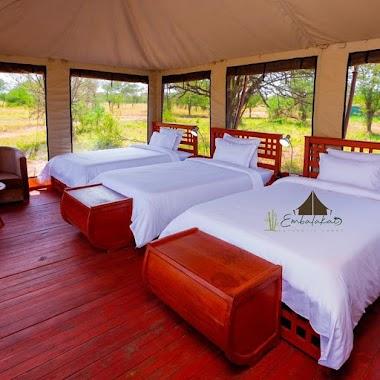 Camp and Lodge safaria thebiggmaxculturaltours Tanzania