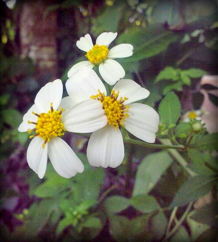 Keindahan Bunga Mekar Di Halaman