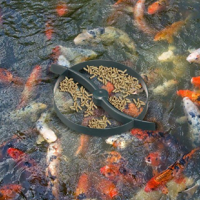 Makanan Ikan Koi Kecil