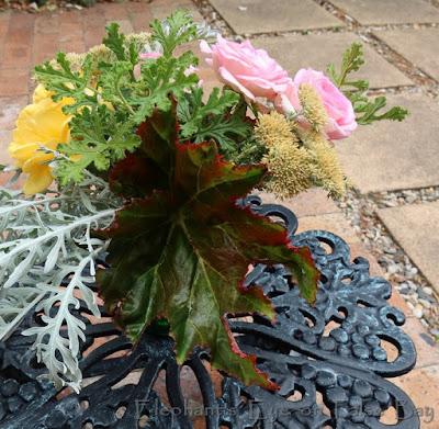 Dark begonia leaf - into each life a little rain must fall