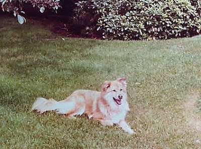 You never forget your first dog.  My first dog Ginny was such an important part of my childhood.