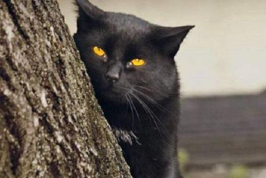 القطط السوداء,القطط,قطط,السوداء,الجن,القطة,السعودية,القط الأسود,القط الاسود,القط,معلومات,الأسود,قط أسود,القطة السوداء,حول العالم,الشيطان,السحر,هل القطط السوداء,القطط السمراء,المغرب,المنام,السحر الأسود,قط,عشاق القطط السوداء,متع عقلك,شيطان,القطط الشيرازى