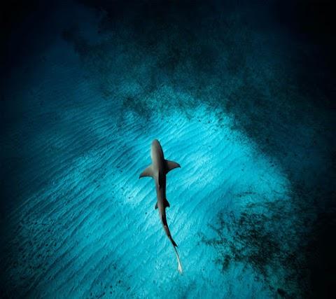 Hình Nền Iphone 6 Plus Chất Cá Mập Đại Dương