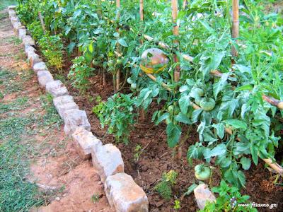 Τι φυτεύουμε, καλλιεργούμε και συγκομίζουμε τον Ιούνιο